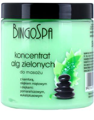 BingoSpa Algae concentrado con algas verdes para masajes