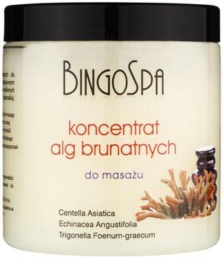 BingoSpa Algae concentrado con algas marrones para masajes