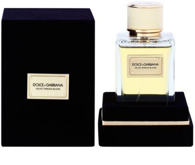 Dolce & Gabbana Velvet Mimosa Bloom woda perfumowana dla kobiet 1