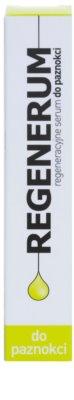 Regenerum Nail Care regenerierendes Serum Für Nägel und Nagelhaut 2