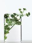 L'Oréal Paris Botanicals Strength Cure balsam pentru par deteriorat