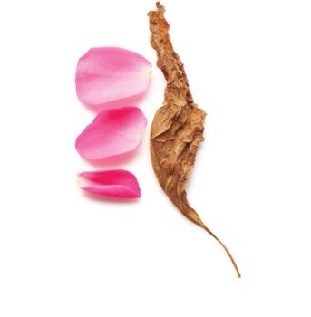 Armani Sì  Intense Eau de Parfum for Women 100 ml