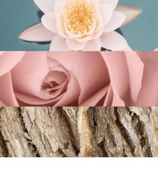 Calvin Klein Deep Euphoria Eau de Toilette voor Vrouwen  100 ml