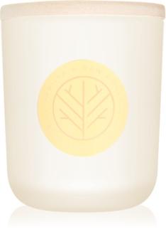 DW Home Vanilla & Raw Honey dišeča sveča  320,49 g z lesenim stenjem