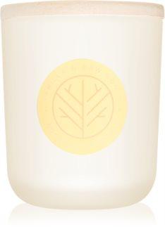 DW Home Vanilla & Raw Honey vonná sviečka 320,49 g s dreveným knotom