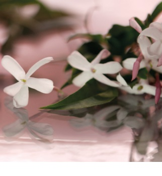 Gucci Bloom woda perfumowana dla kobiet 50 ml pudełko na prezent