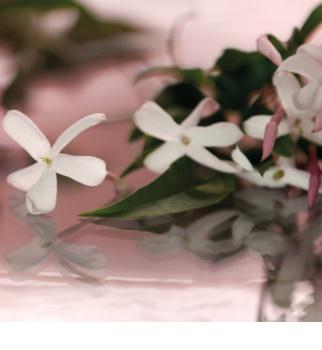 Gucci Bloom Parfumovaná voda pre ženy 100 ml