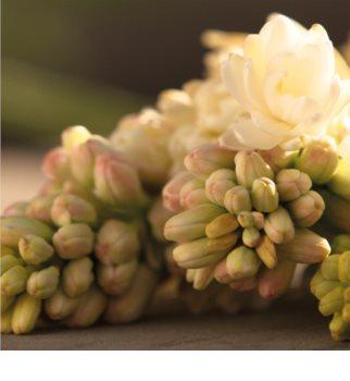 Gucci Bloom woda perfumowana dla kobiet 100 ml