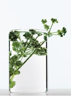 L'Oréal Paris Botanicals Strength Cure abspülfreise Elixier für geschwächtes Haar