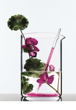 L'Oréal Paris Botanicals Radiance Remedy Shampoo für gefärbtes Haar