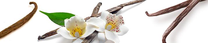 Ingredientele atrăgătoare ale anului 2019, Aromele preferate de la Notino
