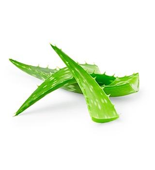 Kosmetik mit Aloe vera