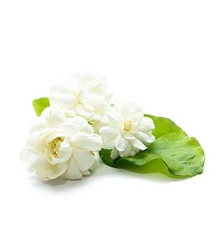 Jasmijn parfum