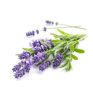 Lavendel geur