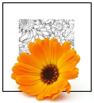 Parfums de niche - floraux