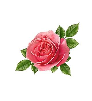 Parfem na bazi ruže