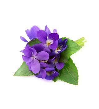perfume de violetas