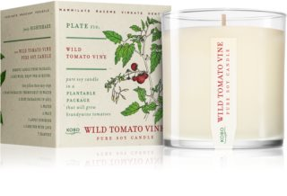 KOBO Plant The Box Wild Tomato Vine scented candle