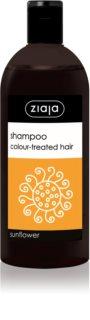 Ziaja Family Shampoo šampon za obojenu kosu
