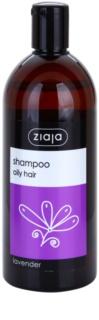 Ziaja Family Shampoo šampón na mastné vlasy