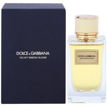Dolce & Gabbana Velvet Mimosa Bloom eau de parfum per donna 150 ml