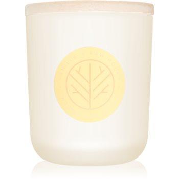 DW Home Vanilla & Raw Honey lumanari parfumate 320,49 g cu fitil din lemn