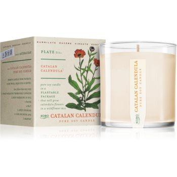 KOBO Plant The Box Catalan Calendula lumânare parfumată