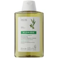szampon z olejkami z ekstraktów z oliwek