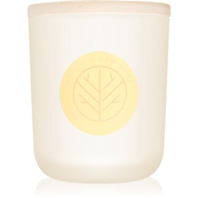 świeczka zapachowa  320,49 g