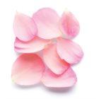 Armani Sì  Rose Signature eau de parfum pour femme 100 ml