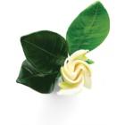 Armani Sun di  Gioia eau de parfum pour femme 100 ml