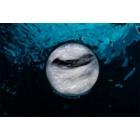 Biotherm Life Plankton Kalmerende en Regenererende Masker