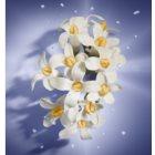 Lancôme La Vie Est Belle Florale Eau de Toilette voor Vrouwen  50 ml