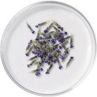 L'Oréal Paris Botanicals Lavender Conditioner für feines Haar