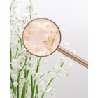 Miu Miu L'Eau Rosée eau de toilette per donna 100 ml