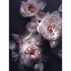 Nina Ricci L'Extase Caresse de Roses eau de parfum nőknek 50 ml