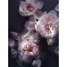Nina Ricci L'Extase Caresse de Roses eau de parfum pentru femei 50 ml