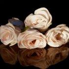 Roberto Cavalli Florence Amber eau de parfum per donna 75 ml