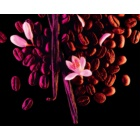 Yves Saint Laurent Black Opium Eau de Parfum voor Vrouwen  90 ml