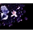 Yves Saint Laurent Black Opium Nuit Blanche eau de parfum pour femme 90 ml
