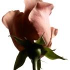Yves Saint Laurent L'Homme Ultime Eau de Parfum Herren 100 ml