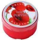 Kringle Candle Wild Poppies Teelicht 35 g