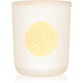DW Home Vanilla & Raw Honey świeczka zapachowa  320,49 g