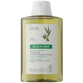 Klorane Olive Extract șampon cu extract de ulei de măsline  200 ml