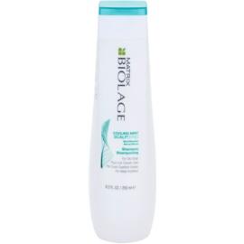 Matrix Biolage ScalpThérapie New Shampoo für schnell fettiges Haar  250 ml